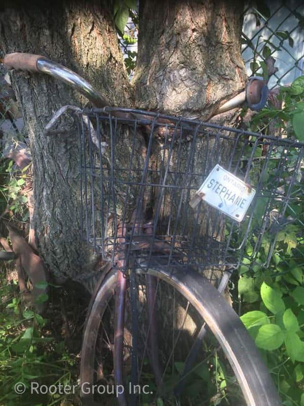 Tree Growing Around Bike c