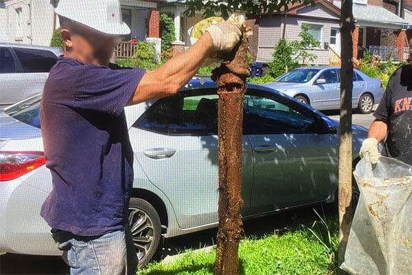 a long tree root removed from main drain Can't Flush? We Rush!™